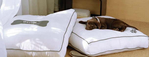 Pet friendly hotel in nyc the westin new york grand for New york pet friendly hotels
