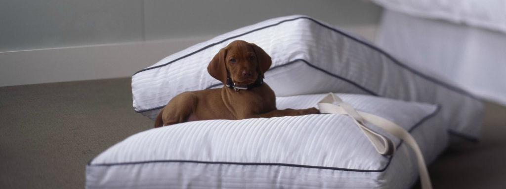 Pet friendly hotel in nyc the westin new york grand for Dog friendly hotels in nyc